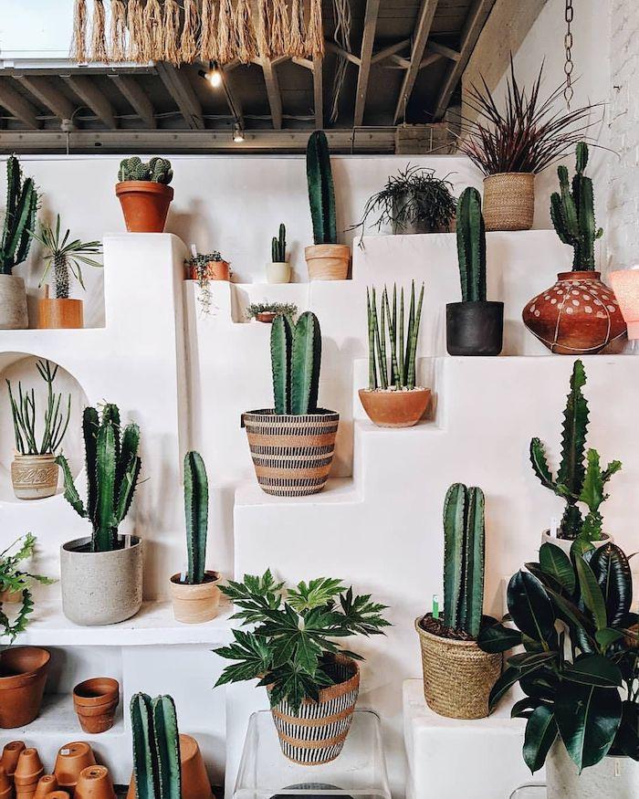 plante verte interieur des cactis dn pot multiples et autres plantes exotiques sur fond blanc ambiance depaysante