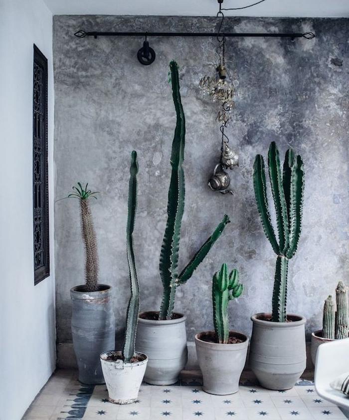 plusieurs grands cactus plante verte appartement en pots gris devant mur de fond gris