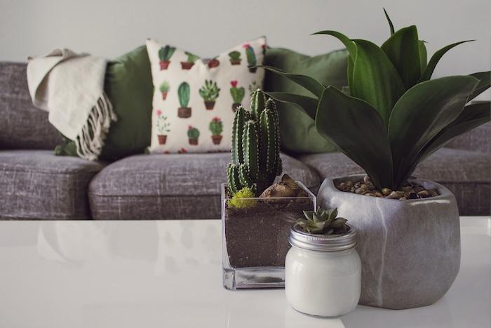pots de cactus deco sur table basse blanche canapé gris coussin decoratif cactus