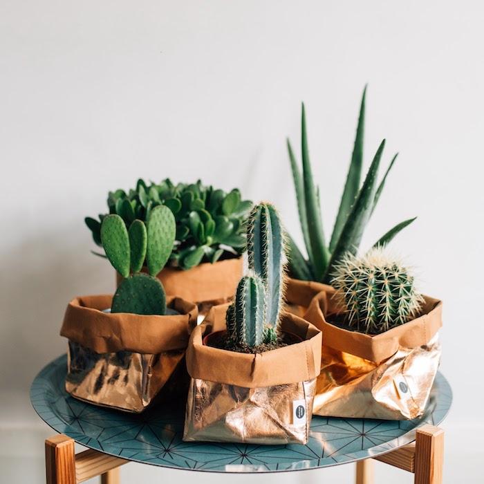 table basse d appoint étagère de fleurs plante verte appartement cactus decoration cache pot sacs dorés