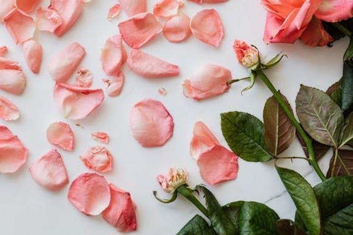des petales fleutris d une rose sur une surface blanche esthetique fanee et romantiaue joli fond d ecran