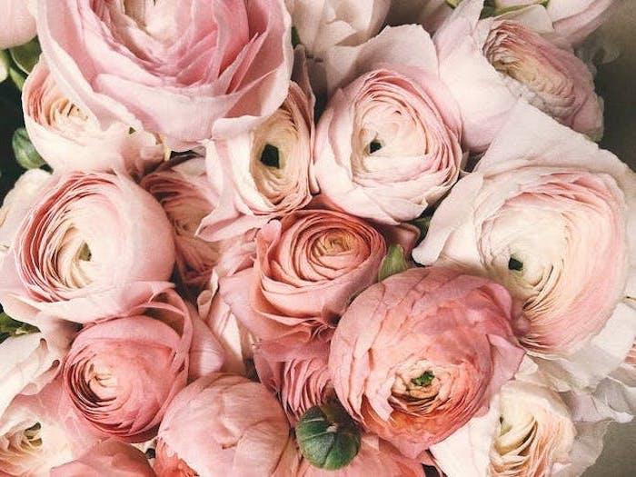 des roses et pivoines le plus beau fond d ecran esthetiaue fannee et romantique