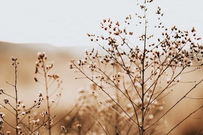 fond d ecran neutre couleurs terrestres avec des plantes seches fond d ecran pale