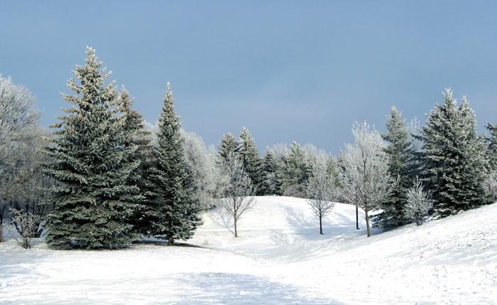 arbres de noel paysage montagne nature sauvage pure tapis neige blanche lumière jour noel