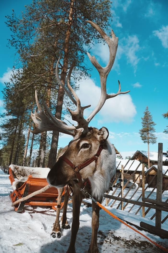 cerf traîneau nature image d hiver arbres ciel bleu nuages blanches maison bois clôture