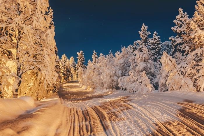 chemin traces neige paysage de reve arbres de noel sapins enneigés promenade nature noel forêt montagne