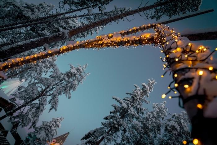 lumière festive décoration extérieure forêt sapins enneigés arbres photo de noel guirlande lumineuse