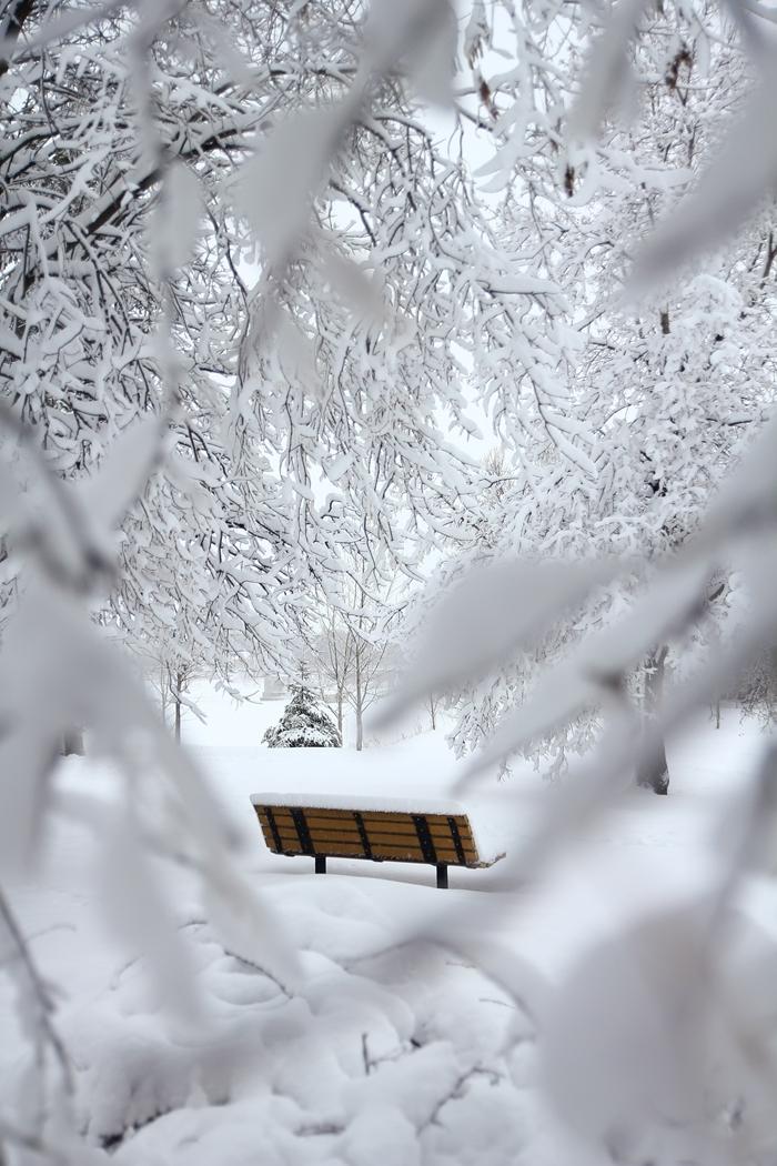 nature d hiver paysage image belle nature blanche arbres couverts de neige banc en bois noel parc