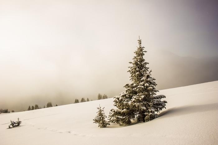 nature montagne sapin de noel paysage enneigé brouillard neige arbres de noel photographie