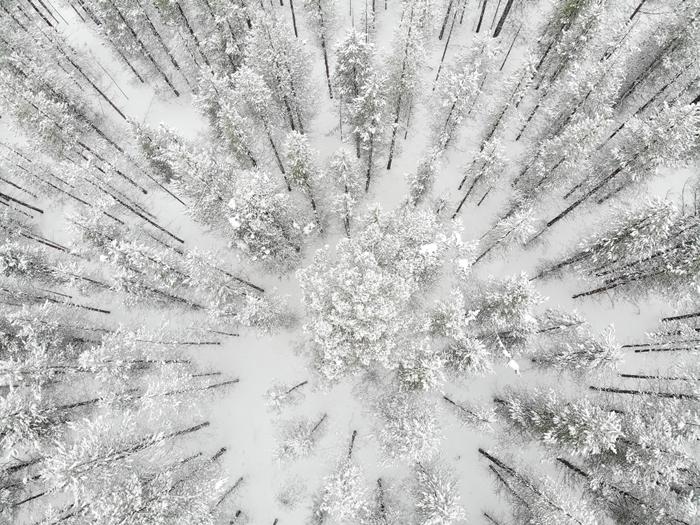 vue d en haut paysage enneigé drône photographie forêt arbres de noel montagne enneigée