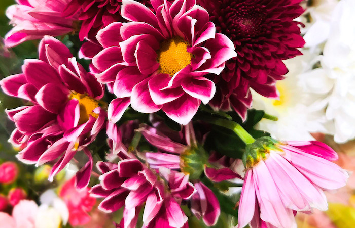 association de couleurs des fleurs roses avec des nuances jaunes et blancs