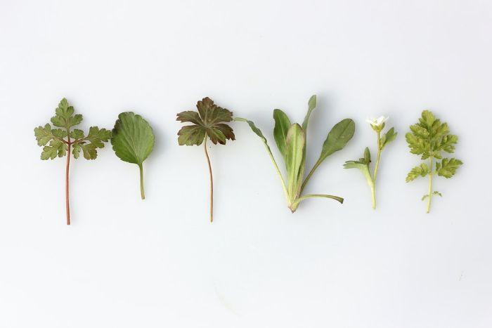 plantes vertes tisane the comment consommer la tisane