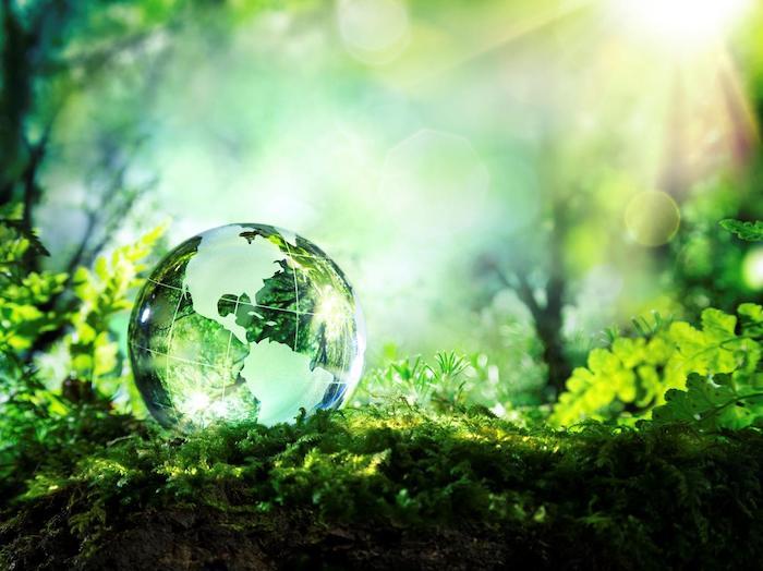 un globe terrestre dans la nature sur des plantes vertes et mousse ensolleilles