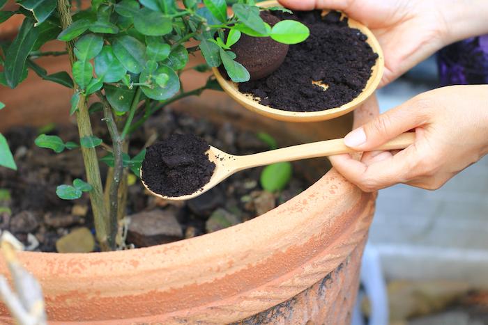 deux mains qui versent de café dans un pot a fleurs quelles plantes aiment le marc de café