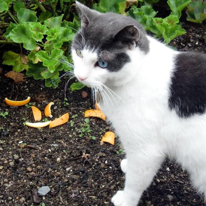 marc de café chat en noir et blanc dans le jardin pres des plantes vertes