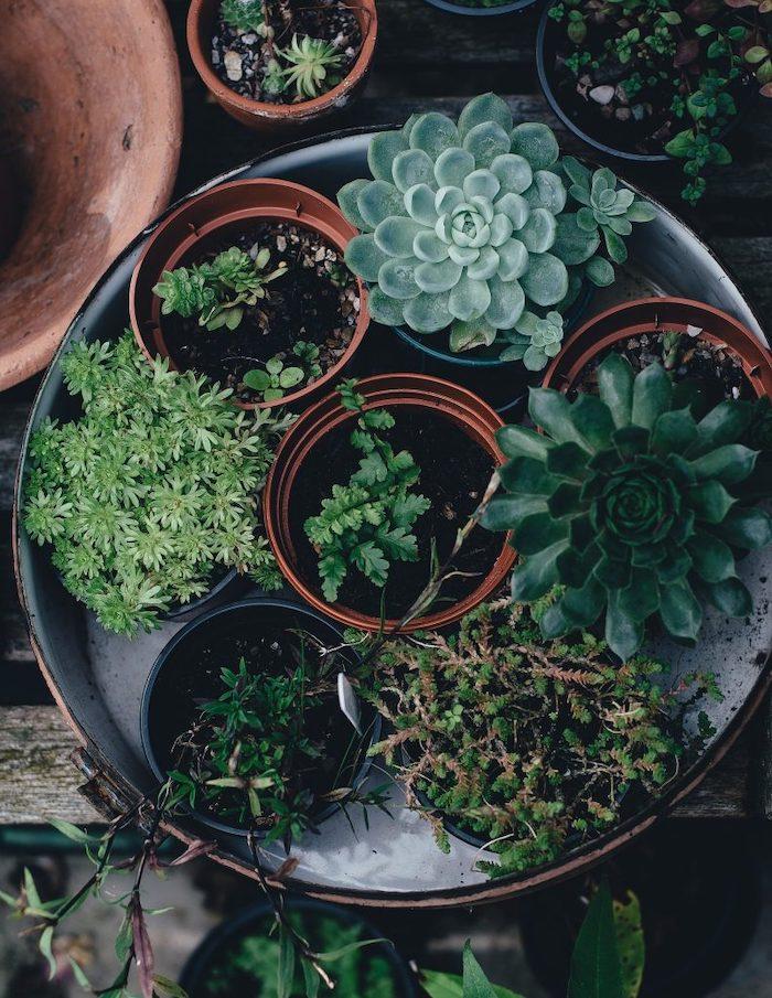 marc de café plante un plateau en metal avec des pots de succulents verts