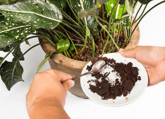 marc de café plante un pot a fleurs et deux mains qui versent marc d une assiette porcelaine