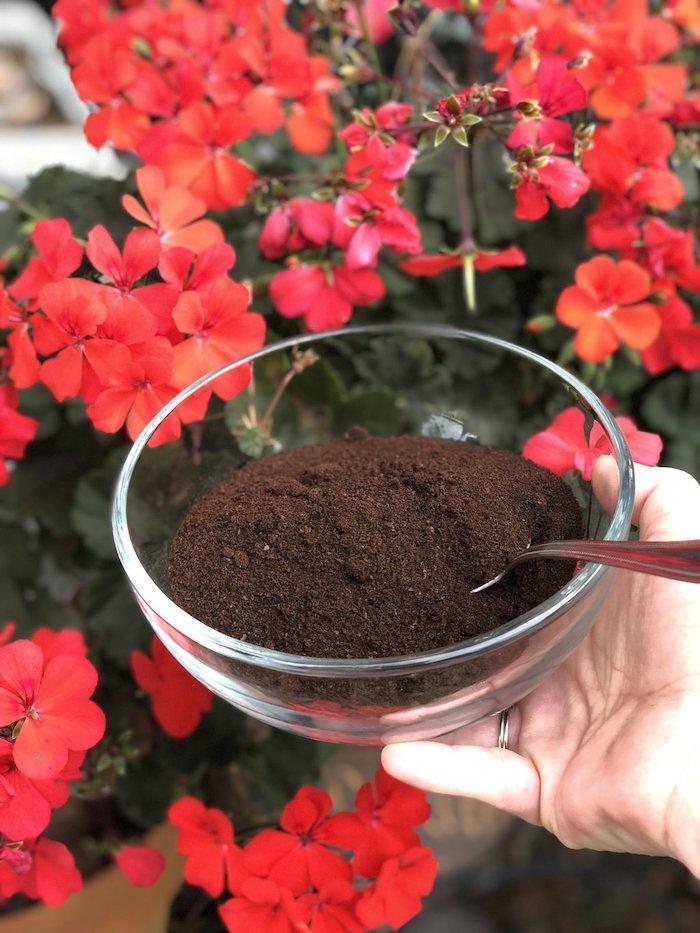 marc de café potager une assiette remplie devant des plantes rouges