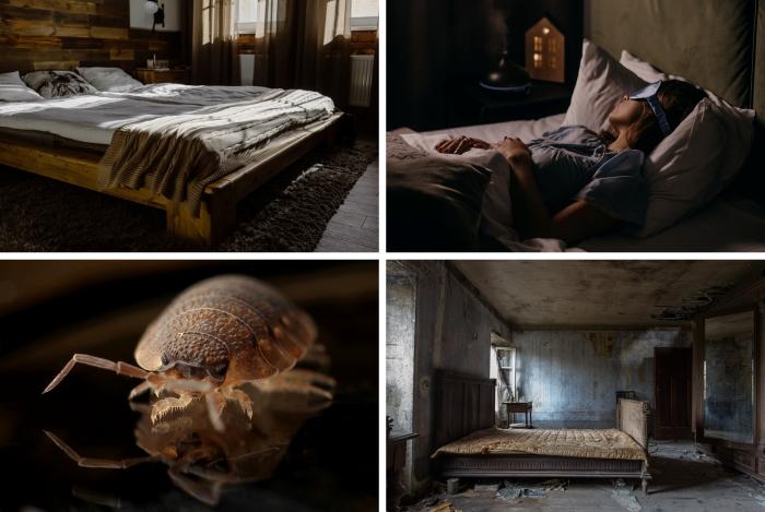 trouble sommeil présence insectes minuscules punaises de lit cadre de lit bois matelas inconfort