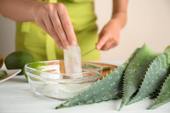 aloe vera recette extraction gel plante médicale préparation masque cheveux sains anti grasse