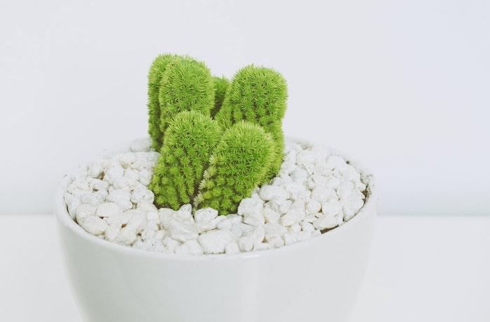 cactus avec cailleux blancs comment choisir le bon plant vert pour votre demeure