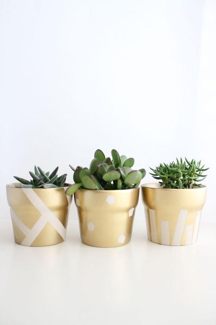 création avec pot de fleur trois succulents au fond blanc dans des conteneurs peints avec aérosol doré et des elements blancs
