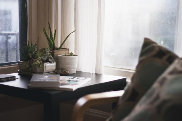 décoration intérieur plantes vertes succulentes variétés aloe vera livres fauteuil bois aloe vera utilisation