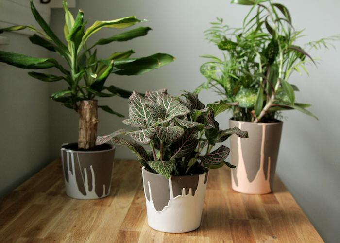 décoration pot en terre cuite troi plantes verte sur une table en bois peintes avec de la peinture blanche et couleur coral.jpg
