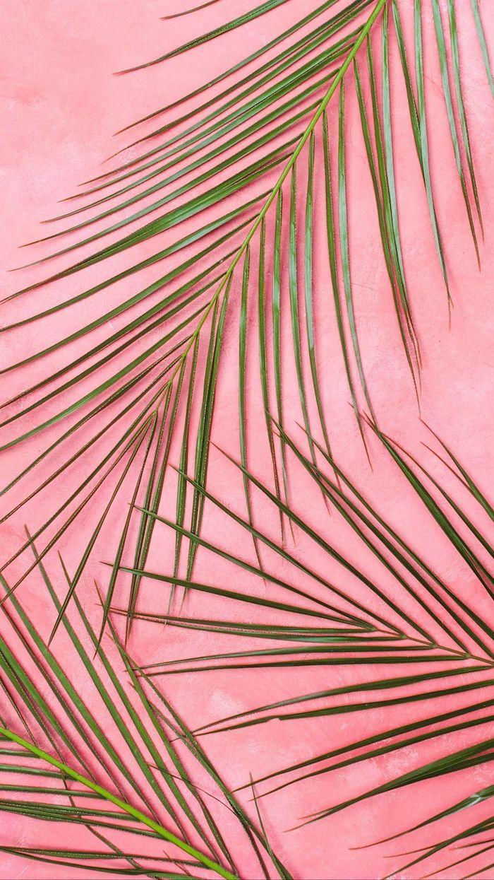 des branches palme verte sur fond rose exemple d image de fond simple et chic