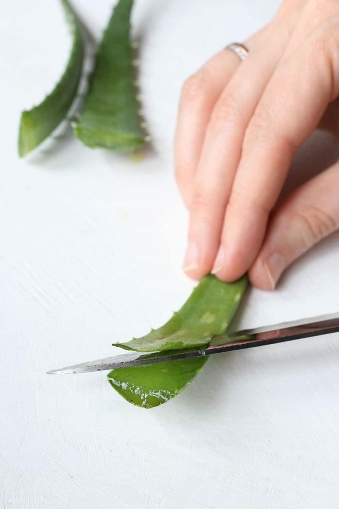 exemple comment extraire le gel aloe vera maison feuille d aloe plante verte bienfaits santé