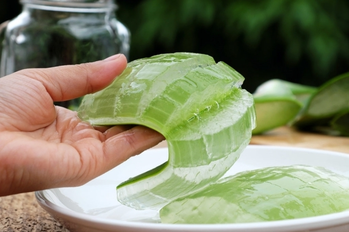 feuille aloe vera peler la peau verte toxique plante médical extraction de gel bienfaits peau