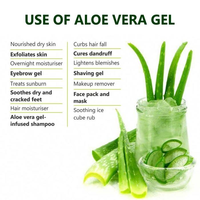 feuilles plante gel extrait aloe vera utilisation plante maison médicale bienfaits corps peau