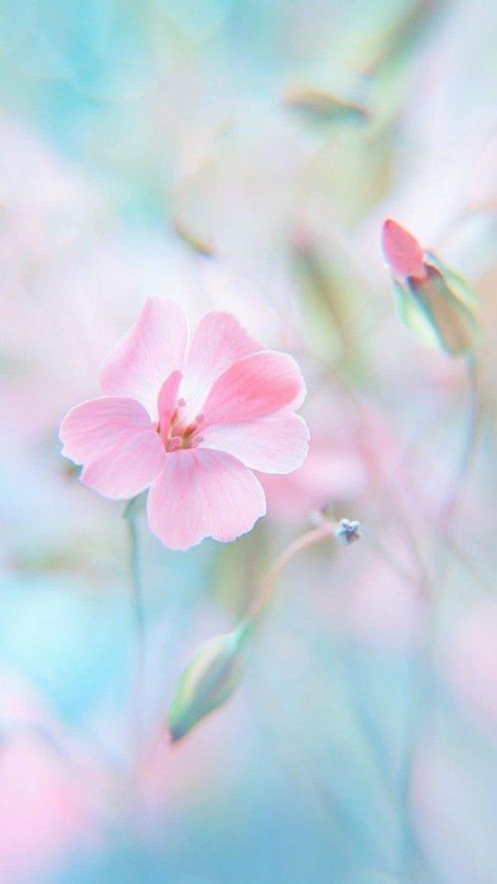 fond d écran fleur de ton rose pastel sur fond bleu et rose dilué
