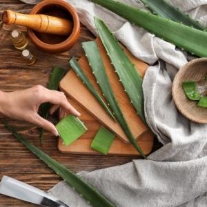 Que faire avec de l'aloe vera ? Un guide complet pour profiter de la plante médicale