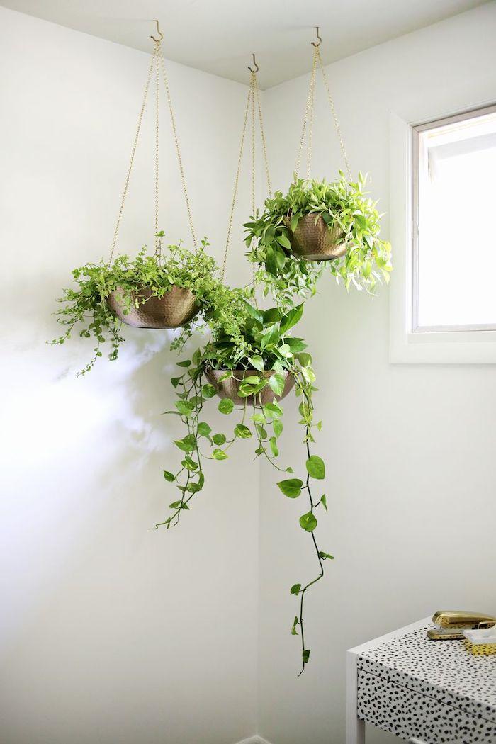plante a suspendre trois pots a fleurs accrochés au plafon et pleines des plantes poùptueuses