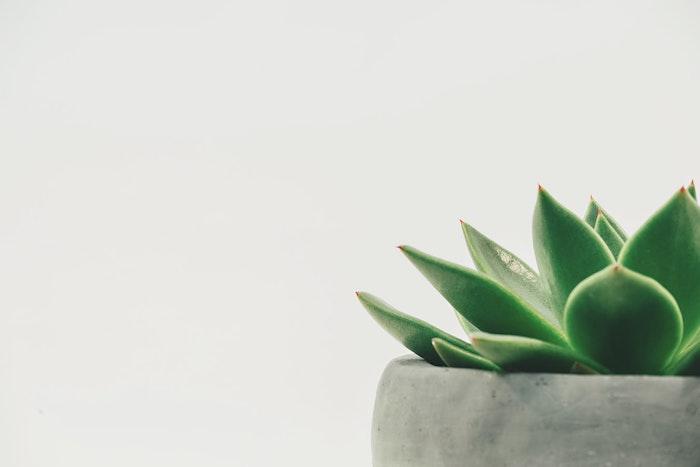 plantes vertes pour votre interieur comment faire le bon choix