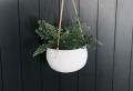 Création avec pot de fleur : 40 + idées pour incorporer les plantes vertes dans sa maison