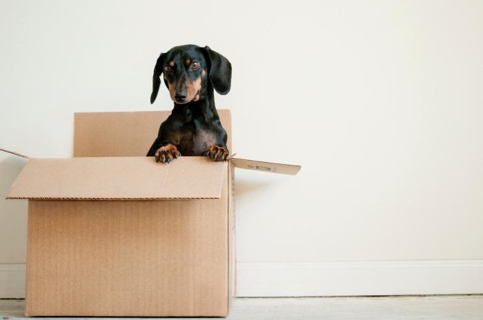 préparations déménagement boîte carton emballage objets chien mur blanc