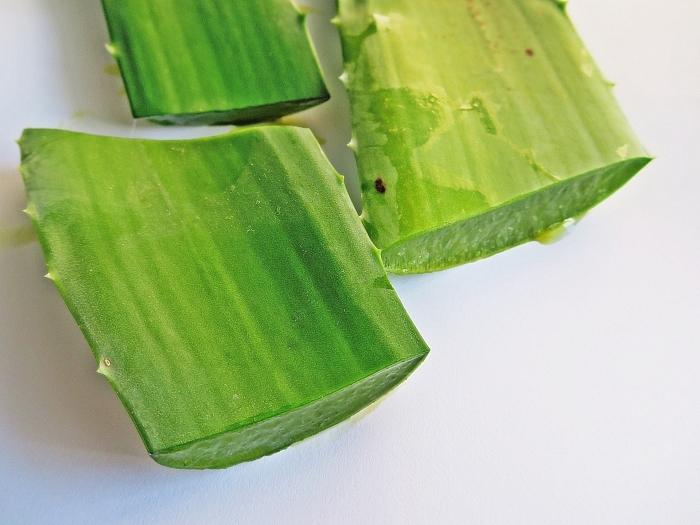 utilisation aloe vera pour la peau extraction gel feuille verte plante médicale maison