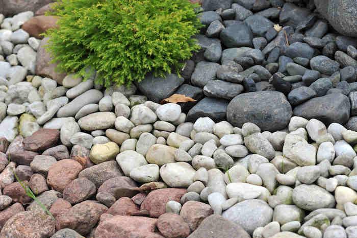 des pierres naturels décoratifs de trois type différents blanc noirs et rouges et une petit arbuste