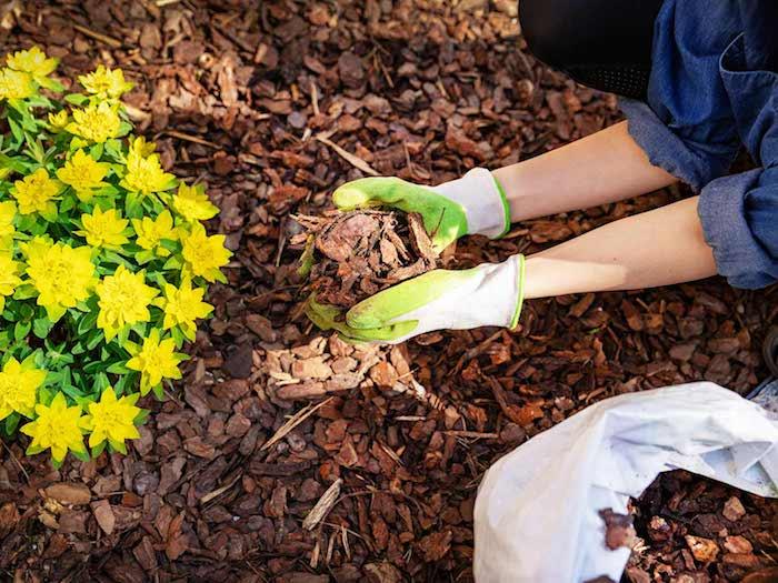 deux mains qui tient de l écorce utilisé comme décoration dans le jaridn a coté d une plante jaune
