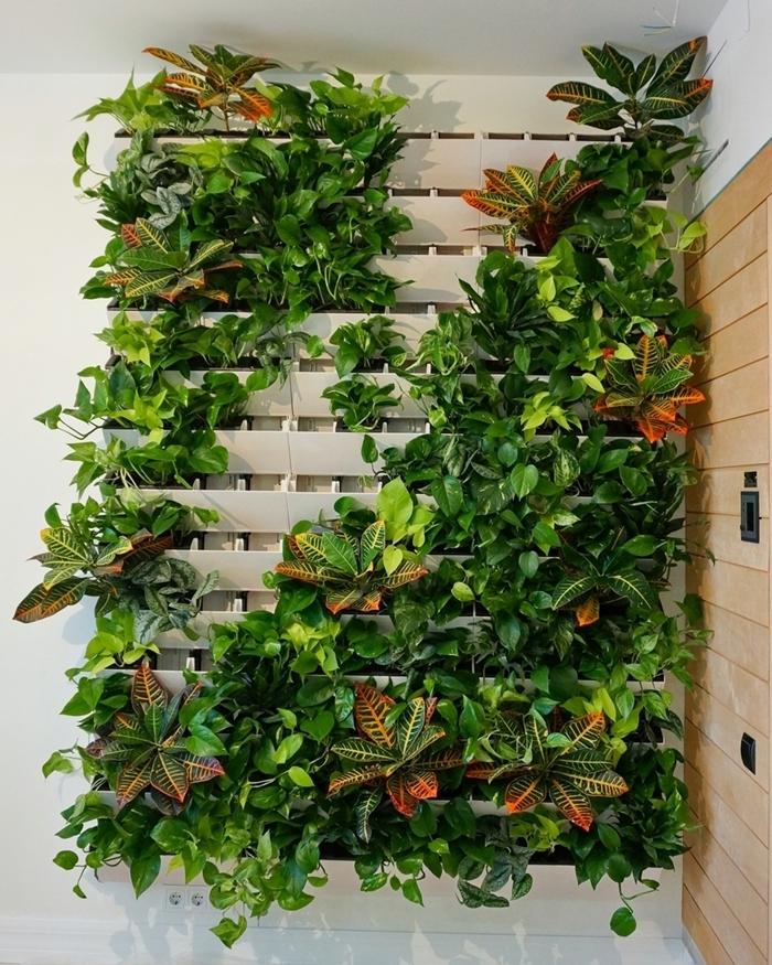 diy mur en bois blanc construction mur fleuri décoration murale petit espace plantes grimpantes
