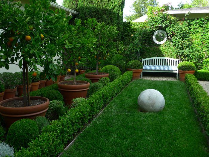 exemple aménagement jardin extérieur avec gazon banc de bois buis et mur cloture végétal decoration verte