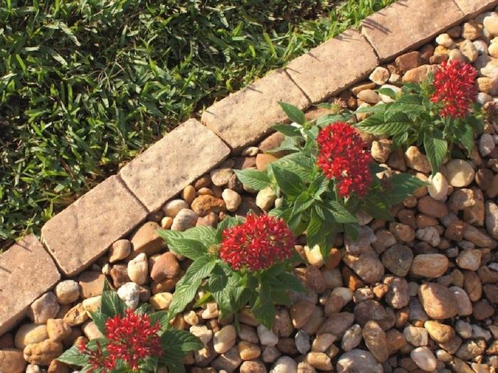 parterre de fleur avec cailoux divisé de la pelouse avec des pierres idée de déco extérieure