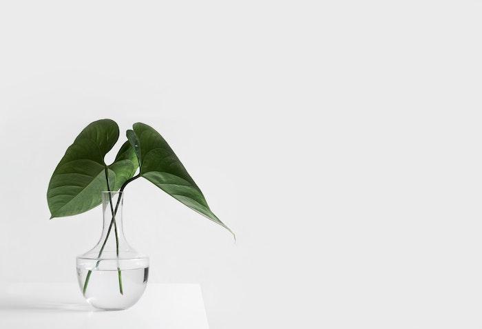 petite vase en verre transparente plantes vertes poses dans l eau