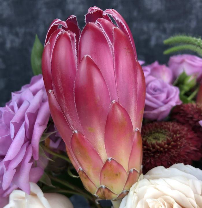 photo de fleur exotique en rose devant des roses blanches et violettes avec une forme de cone