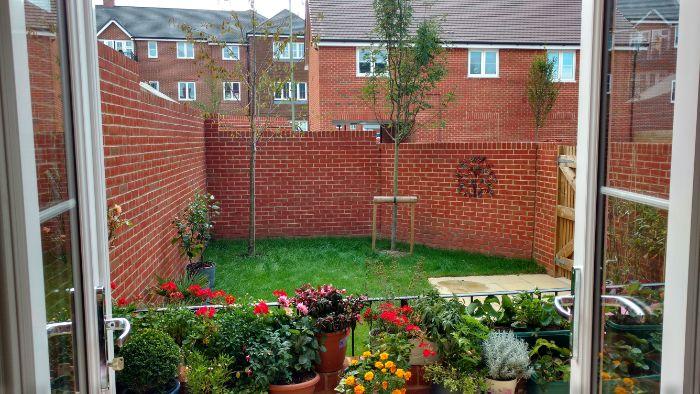 pots de fleurs variés au rebord d une fenetre qui donne sur petit jardin cour exterieure mur de briques gazon