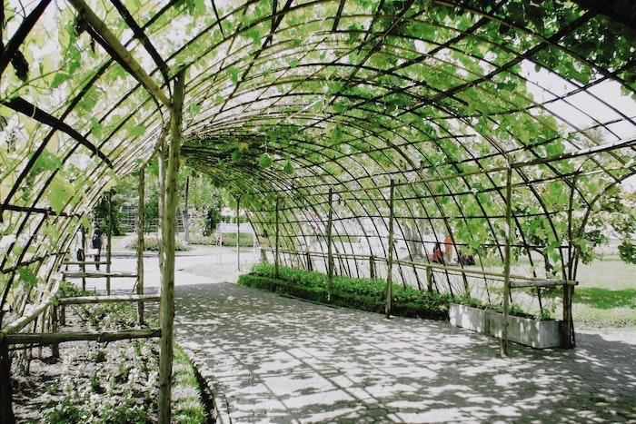serre de jardin plantes vertes