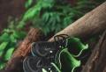 Comment porter les sneakers New Balance ?
