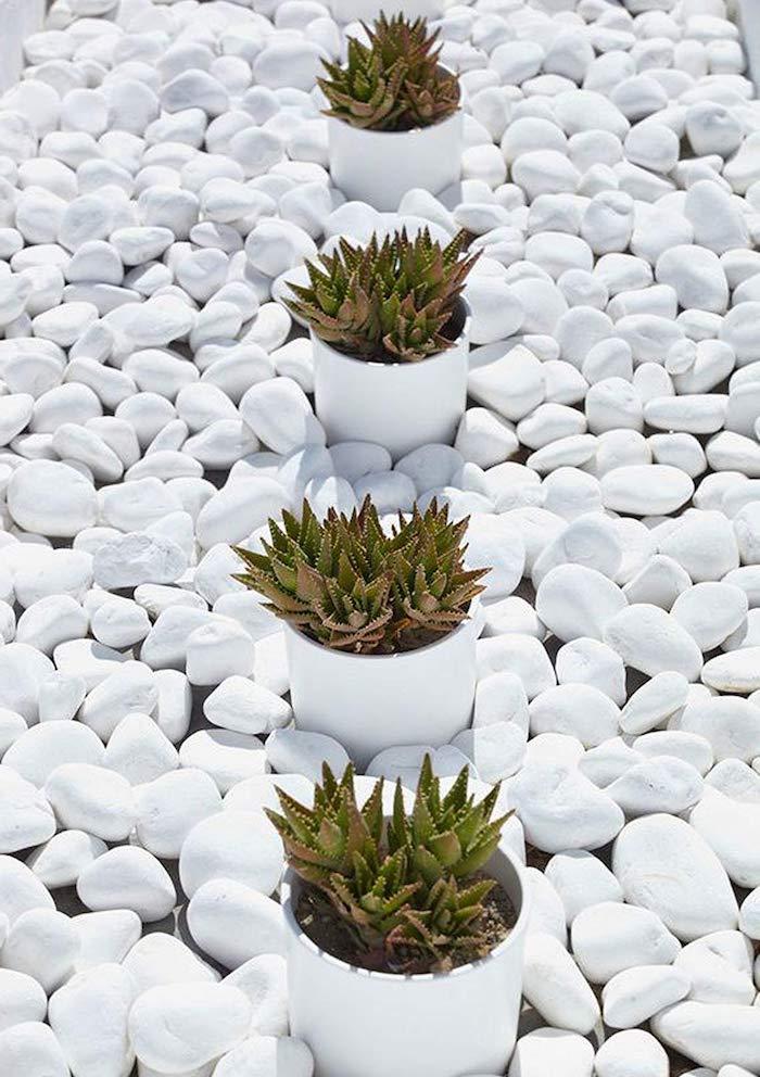 un exemple de décoration jardin avec galets blanc autour des succulents dans des pots a fleur
